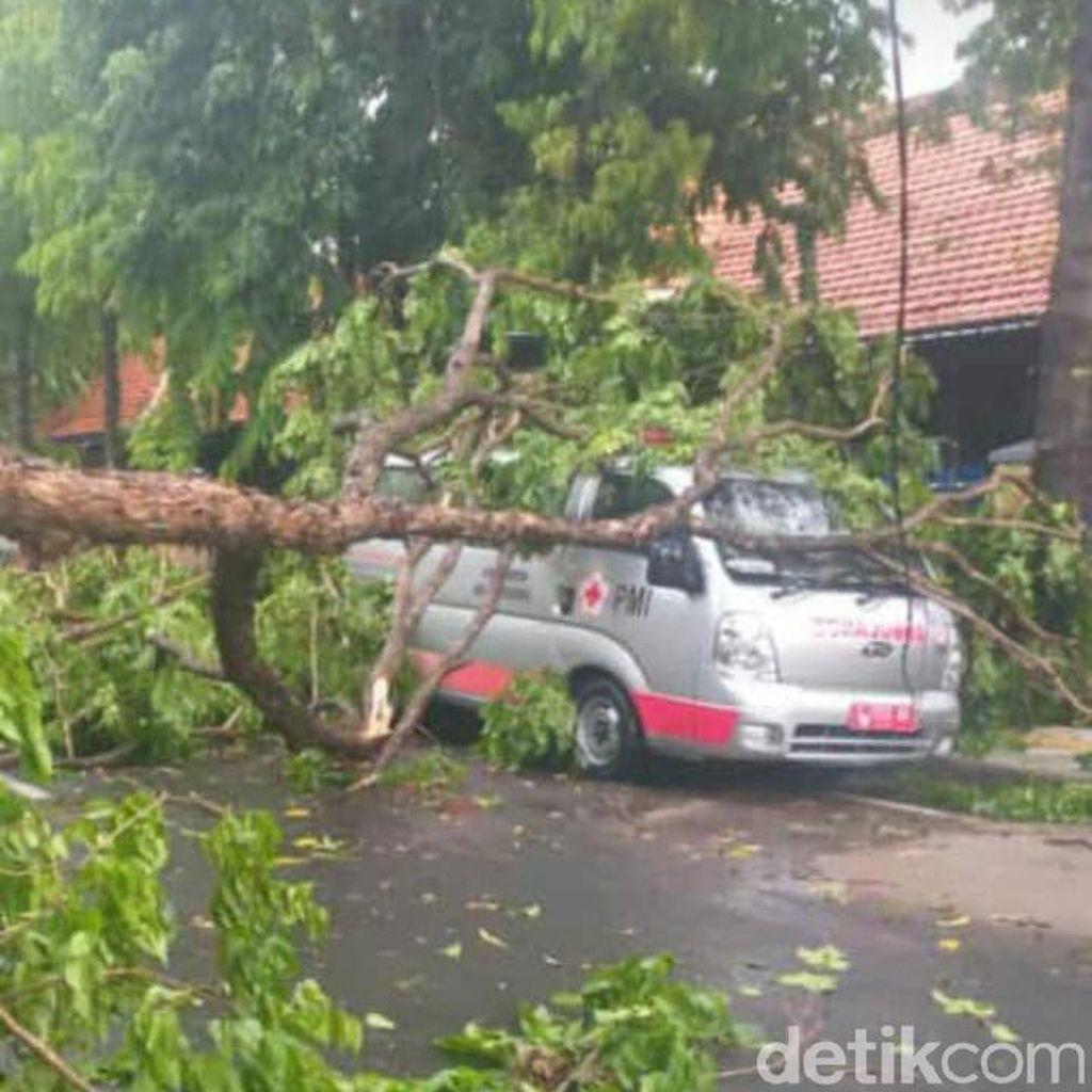 Angin Kencang Terjang Bojonegoro, Banyak Rumah Ambruk dan Pohon Tumbang