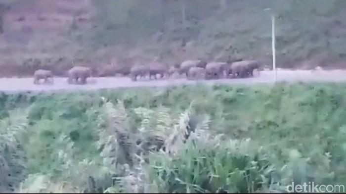 Foto: Gajah liar di Jalanan Bener Meriah, Aceh (dok ist)