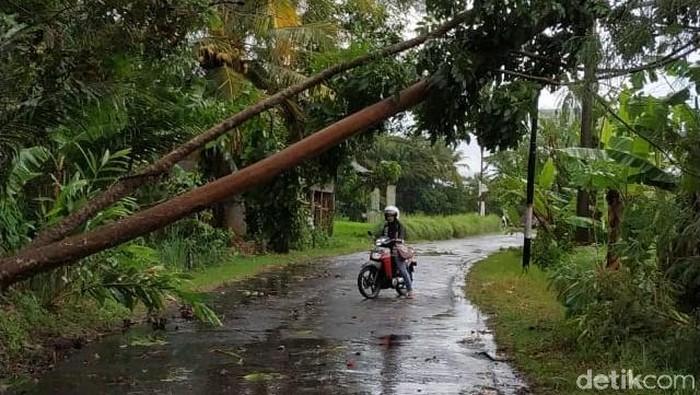 Pohon tumbang akibat angin kencang di Sleman. (Foto: BPBD Sleman)