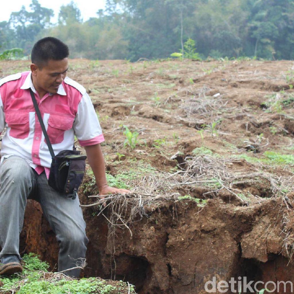 Video Tanah Bergerak Bikin Warga Desa Bunijaya Cemas