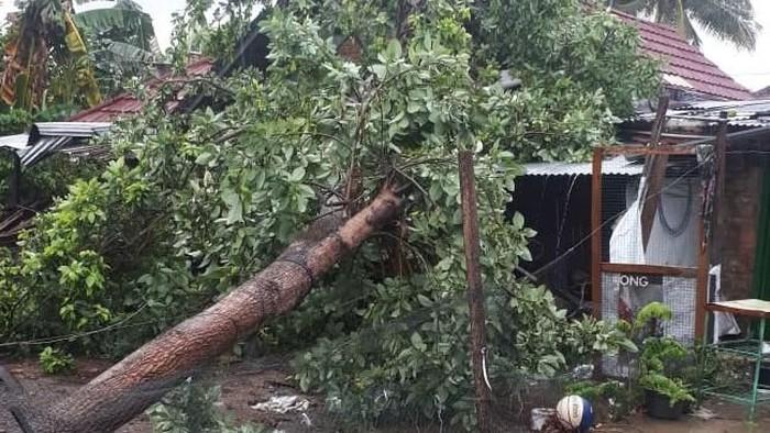 Rumah seorang warga di Sleman tertimpa pohon tumbang akibat diterjang angin kencang, Senin (9/12/2019). Foto: dok BPBD Sleman