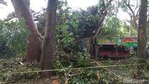 Angin Kencang Tumbangkan Pohon Timpa Warung Kopi, Seorang Mahasiswa Tewas