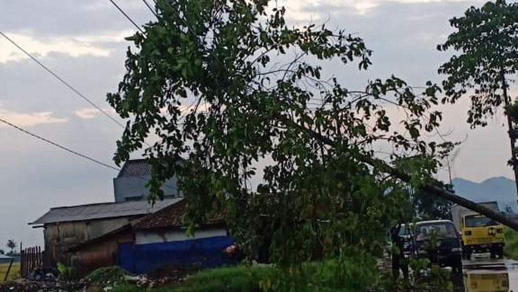 Hujan Es dan Angin Mengguyur Kabupaten Bandung, 3 Pohon Tumbang