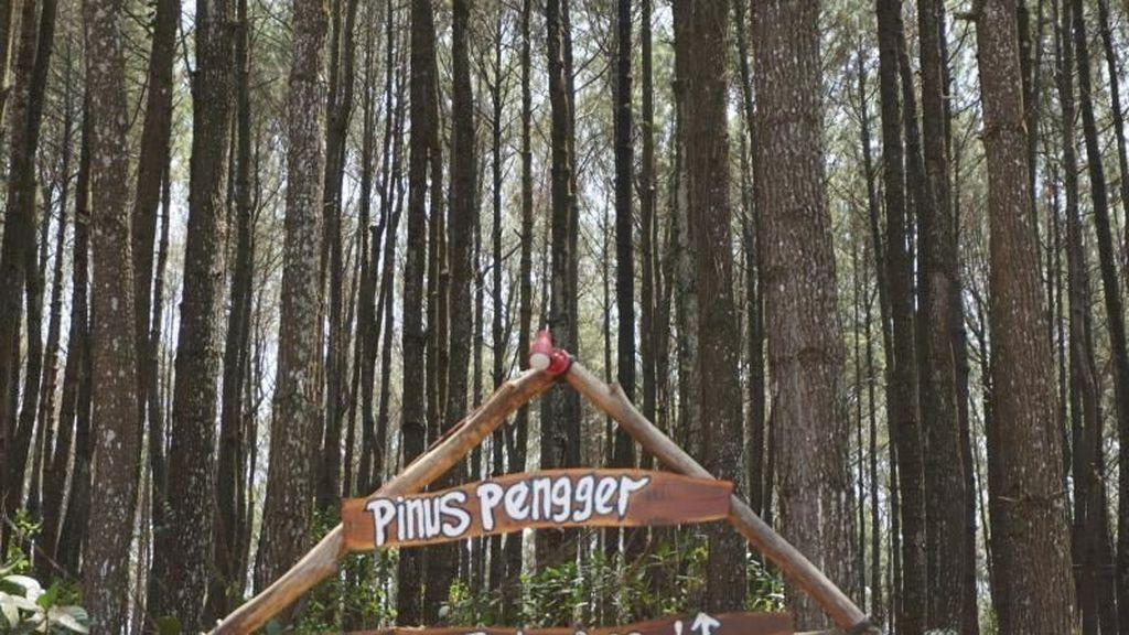 Mendatangi Hutan Pinus Paling Terkenal di Yogyakarta