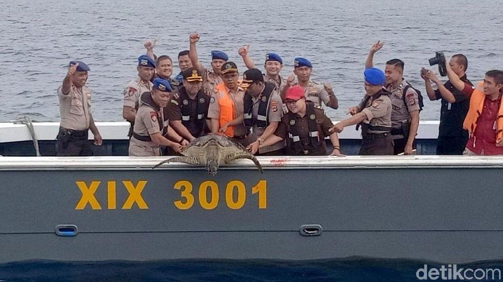 Polairud Sulteng Lepasliarkan 23 Penyu Sisik Hijau Hasil Tangkapan Nelayan