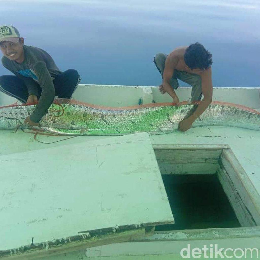 Kisah Penangkap Ikan yang Diviralkan Jadi Tanda Kegempaan