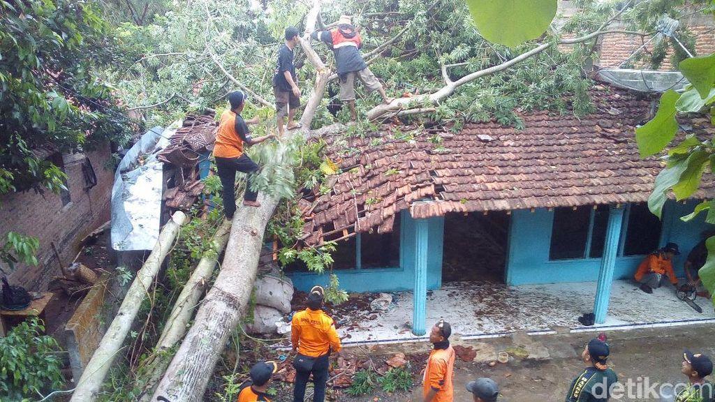 Hujan dan Angin Tumbangkan Pohon di Kudus, Seorang Warga Tertimpa