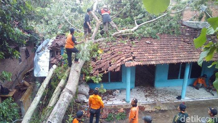 Petugas mengevakuasi pohon tumbang di Desa Tergo, Dawe, Kudus, Selasa (10/12/2019). (Akrom Hazami/detikcom)