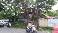 Angin Kencang, Sejumlah Pohon di Semarang Tumbang
