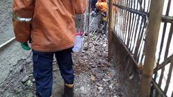 9 Anak Ular Kobra Dievakuasi dari Rumah Warga di Cakung Jaktim