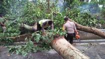 Angin Kencang Tumbangkan Puluhan Pohon dan Rusak Rumah Warga di Blitar