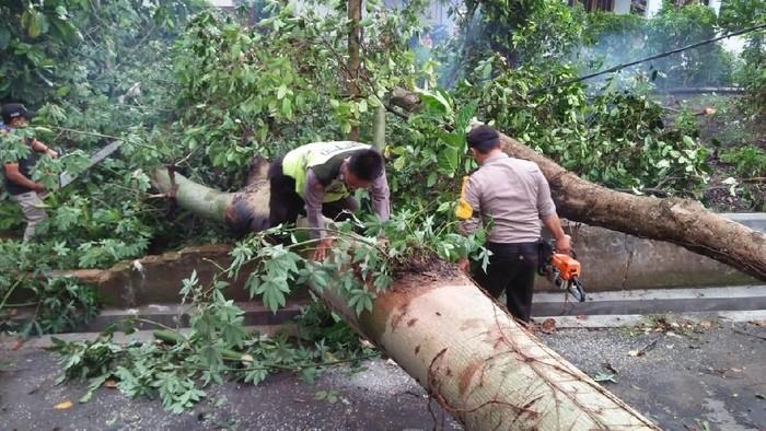 Pohon yang tumbang akibat angin kencang di Blitar/Foto: Istimewa