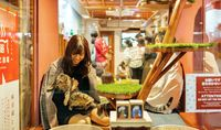 Hotel Kapsul Kucing Baru di Jepang
