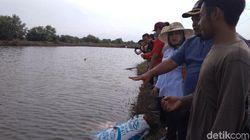 Dongkrak Penghasilan, Nelayan Indramayu Budi Daya Rumput Laut