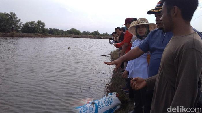 Pertamina menyalurkan rumput laut kepada kelompok tani dan nelayan di Indramayu. (Foto: Sudirman Wamad /detikcom)