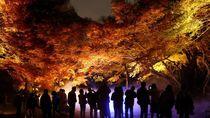 Musim Gugur di Jepang Indahnya Kebangetan