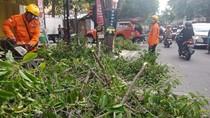 BPBD: 10 Kecamatan di DIY Terdampak Hujan Disertai Angin Kencang