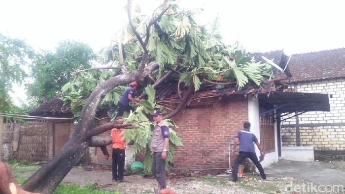 Sebuah rumah tertimpa pohon (Foto: Eko Sudjarwo)