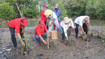 Pertamina Semai 5.000 Mangrove di Pesisir Indramayu