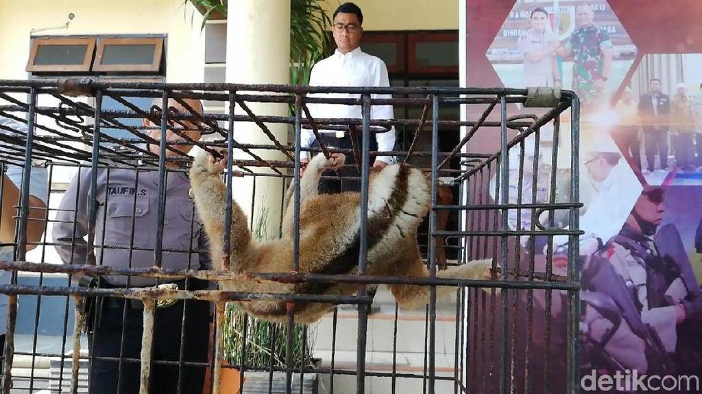 Polisi akan Periksa Penyuplai Belasan Satwa Dilindungi di Pasuruan