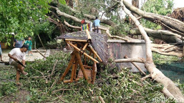 Pohon tumbang di Umbul Manten Klaten akibat lisus.