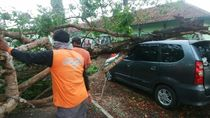 Hujan dan Lisus di Purworejo, Satu Mobil Tertimpa Pohon