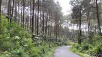 Hutan Pinus Puncak Jahim Ciamis, Ijo Royo-royo yang Menyegarkan