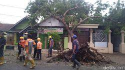 Rumah Rusak dan Pohon Ambruk Akibat Hujan Es dan Angin Kencang di Jombang