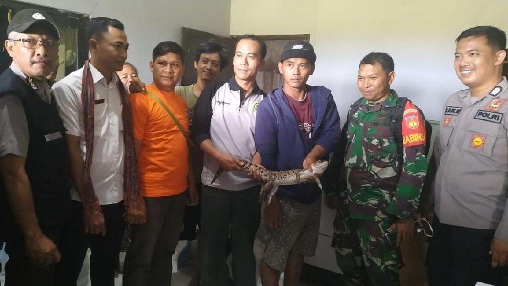 BKSDA Evakuasi Buaya yang Nyasar ke Permukiman di Klaten
