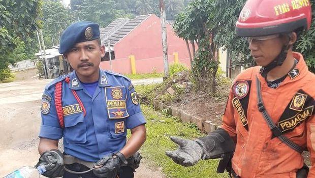 Anak ular kobra di Citayam Village, Kabupaten Bogor