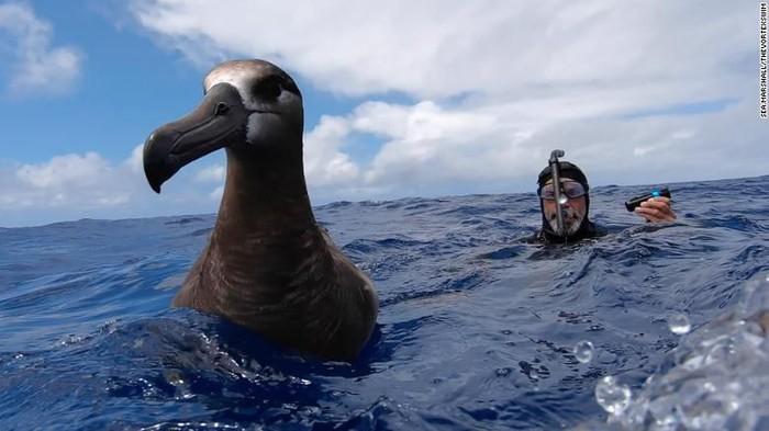 Sampah Plastik di Samudra Pasifik