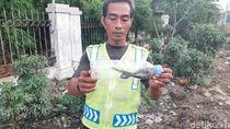 Pedagang Sayur Dipatuk, 4 Anak Kobra Ditangkap di Dekat Pasar Kemiri Depok