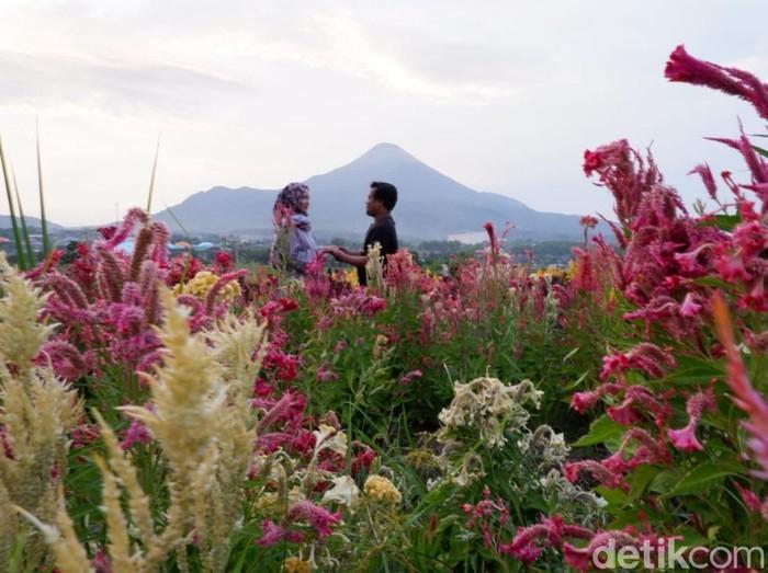 Taman ADN Firdaus di Pasuruan/Foto: Muhajir Arifin