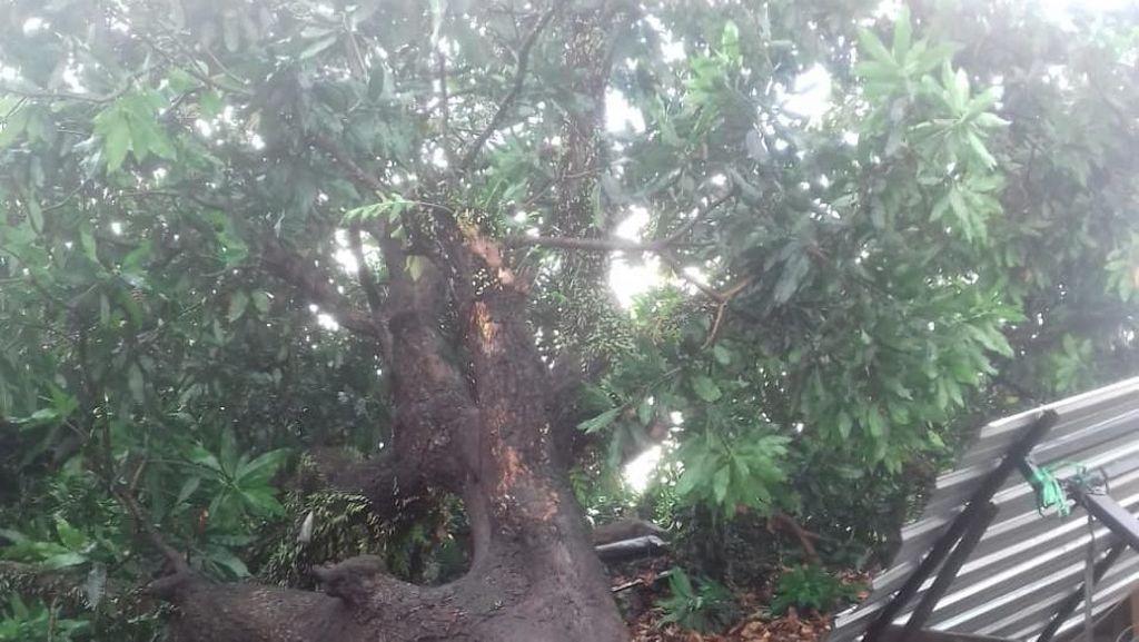 Hujan Deras di Mataram, Puluhan Pohon Tumbang Timpa Rumah dan 6 Orang Luka