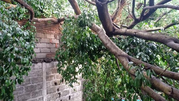 BPBD dan dinas terkait mengevakuasi pohon tumbang.