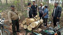 Pencuri Kayu Jati di Hutan Tulungagung Tertangkap