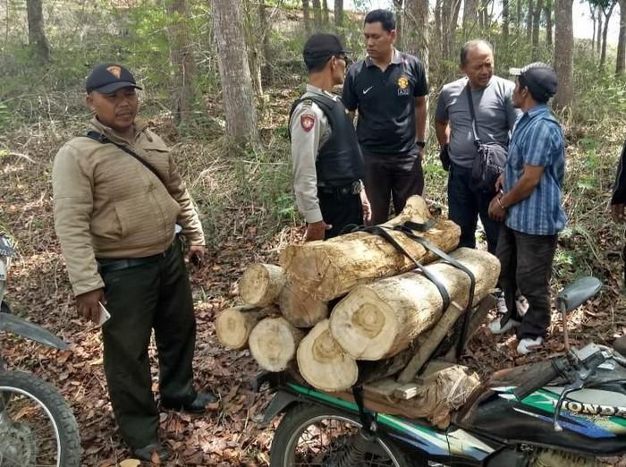 Kayu jati gelondongan yang siap diangkut pencuri/Foto: Istimewa