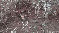 Belasan Telur Kobra Ditemukan di Perumahan Villa Citayam Bogor