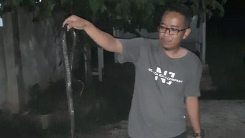 Ular Kobra Hingga Kepala Dua Mudik ke Perumahan di Citayam