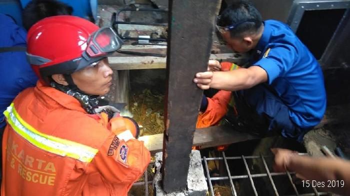 Proses evakuasi ular kobra di Kembangan, Jakarta Barat (Foto: dok. Sudin PKP Jakarta Barat).