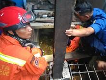 Di Jakarta Barat, 18 Anak Kobra Ditemukan di Permukiman