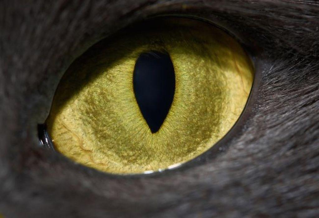 Mata kucing. Foto: Livescience