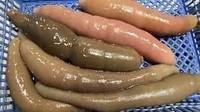 5 Fakta Unik Ikan Penis yang Eksotis dan Gurih Umami