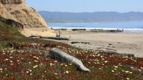 Kondisi ombak di pantai ini pun cukup tenang, menjadikannya spot asyik untuk main paddleboard hingga main air di permukaan pantai (California Beaches)