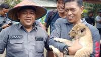 Anak Singa-Leopard Akan Ditampung di Jawa