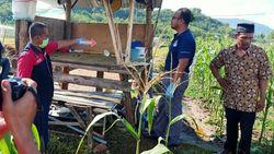 2 Warga Sumbawa Barat Tersambar Petir di Ladang Jagung, 1 Tewas