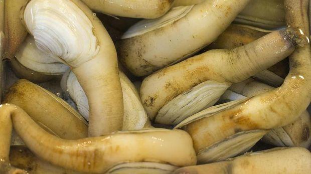 Ikan Penis dan 4 Hewan Lain Berwujud Alat Kelamin Pria