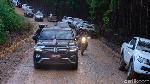 Jokowi Tinjau Ibu Kota Baru Naik Land Cruiser