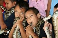 140 Rumah di sana setidaknya memiliki 1 ekor ular kobra atau ular piton (kebanyakan ular kobra). Masyarakat di sana sudah hidup bersama ular sejak 60 tahun lalu (CNN)