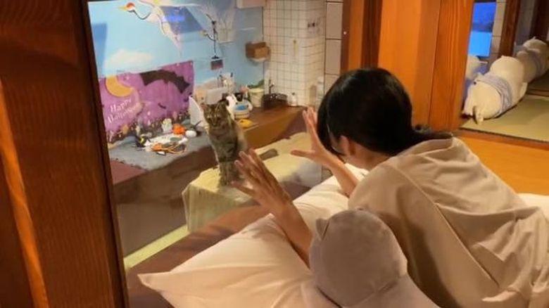 Hotel Kapsul Kucing
